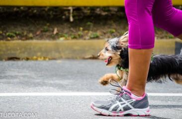 MASCOTAS DE LA COTA MIL: Yorkshire terrier